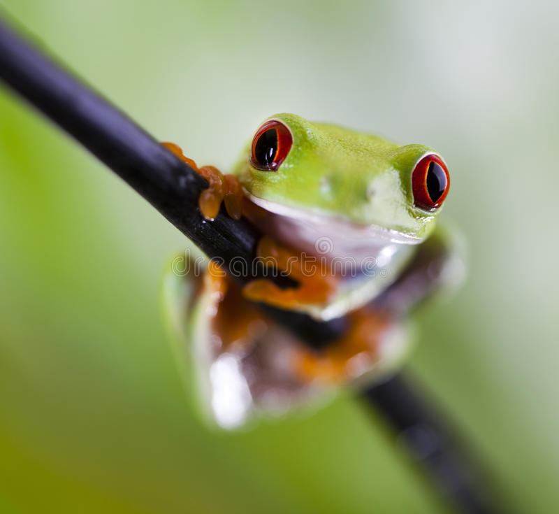 Tree frog. Frog shadow on the leaf on colorful background stock photo
