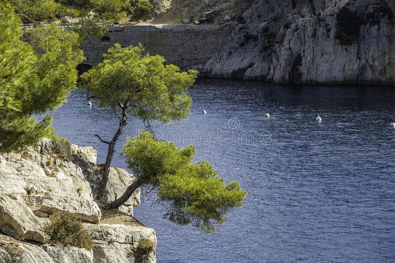 Tree in front of blue turquoise water of calanque national park, south france stock photography