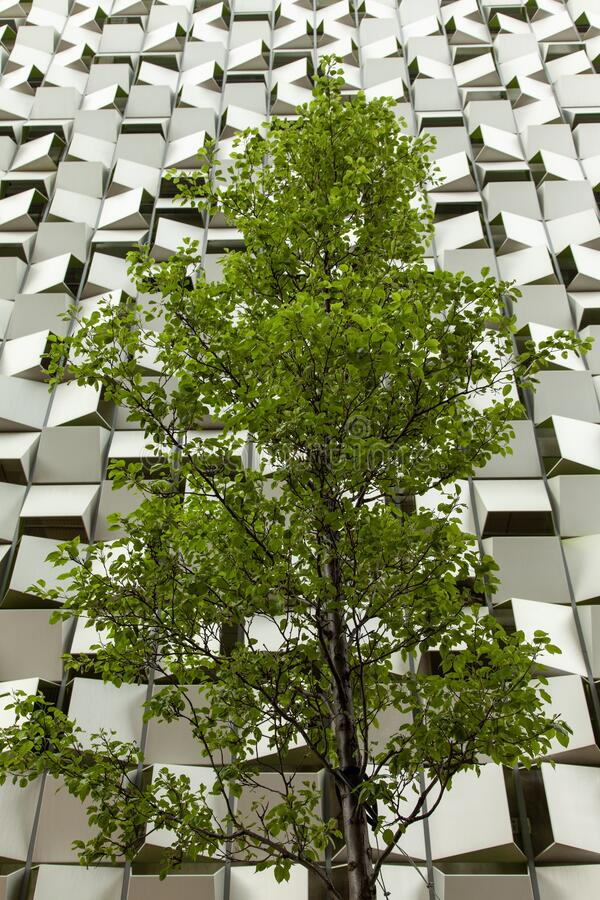 A tree in front of a car park in the shape of a cheesegrater in Sheffield, United Kingdom. A vertical shot of a tree in front of a car park in the shape of a royalty free stock photography