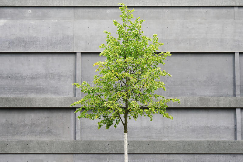 Tree in front of concrete building stock photography