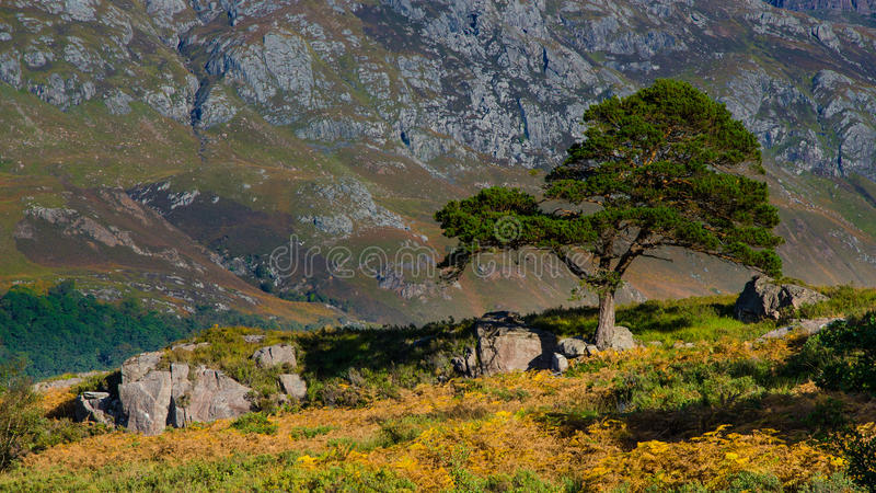 tree in front of a mountain stock photos