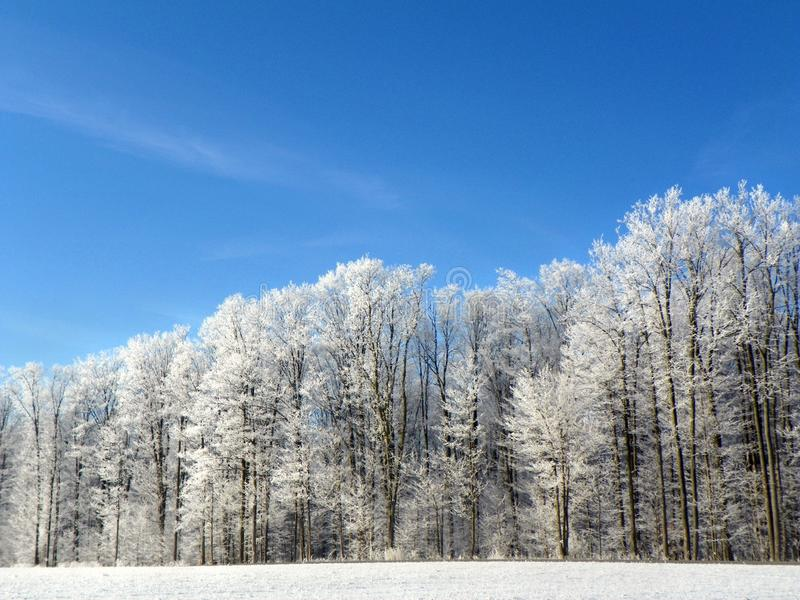 Tree frost outlined on blue sky winter background royalty free stock photo