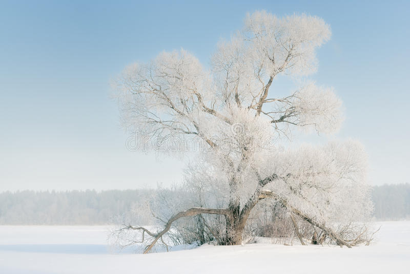 The tree in frost, the snow-covered plain.
