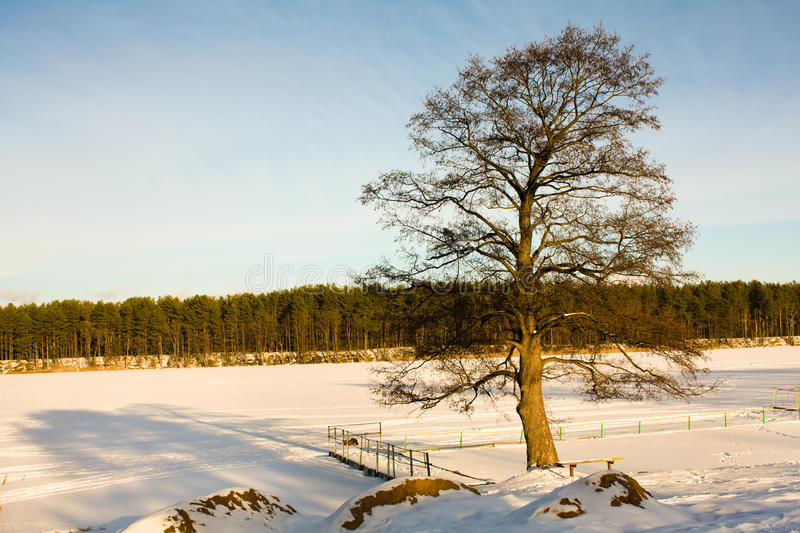 Download Tree at the frozen lake stock image. Image of rural, frost - 21863055