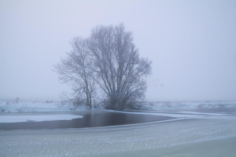 Tree by frozen lake in winter fog royalty free stock image