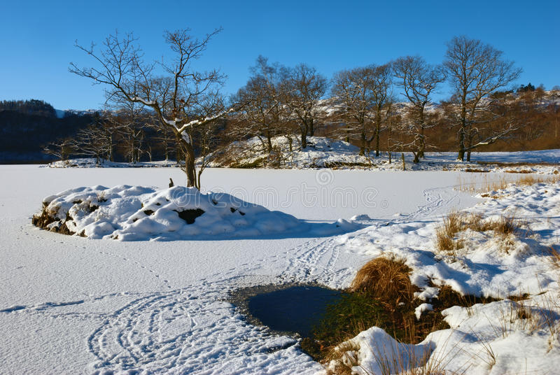 Download Tree on frozen Rydal Water stock photo. Image of purity - 18116338