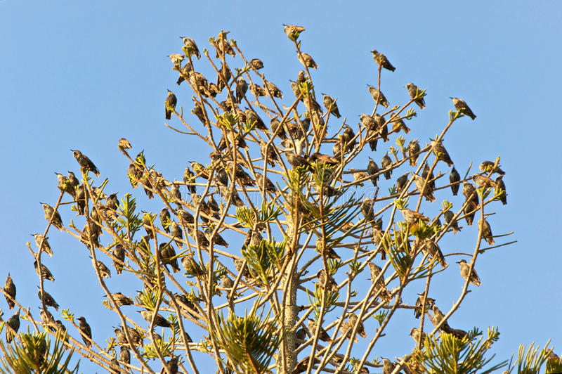 Download Tree Full Of Birds Stock Images - Image: 11319594