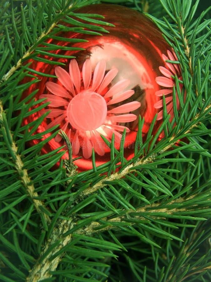 Download Tree  fur-tree  coniferous stock photo. Image of nature - 12248218