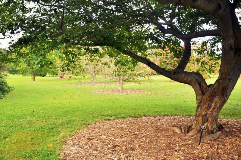 Tree and garden royalty free stock photos