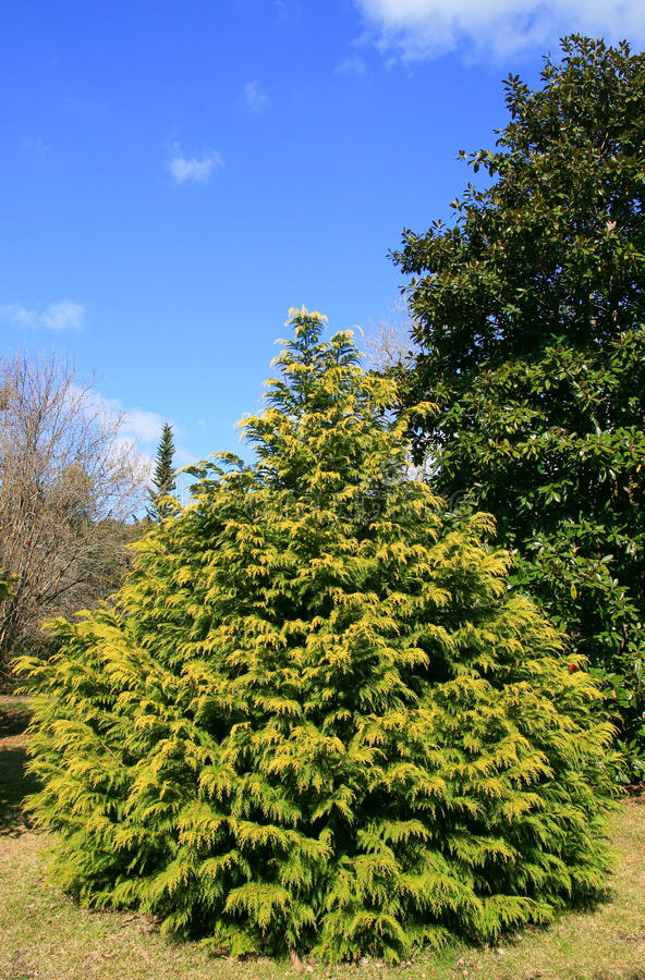 Download Tree in a garden stock photo. Image of outdoors, nature - 11263772
