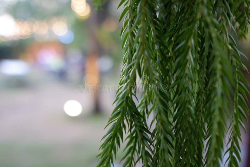Tree in the garden. Secret of green tree stock photos