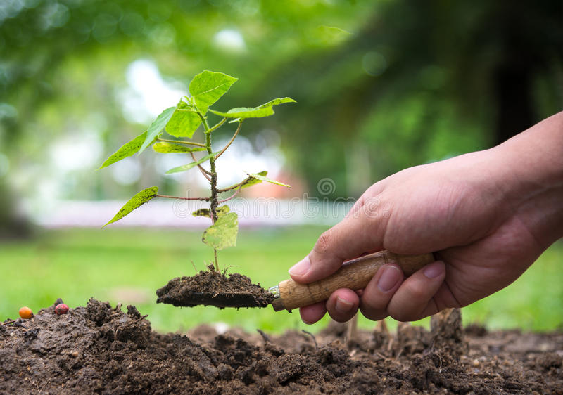 Tree glowth. Planting a tree. Close-up on young man planting the tree while working. In the garden royalty free stock image