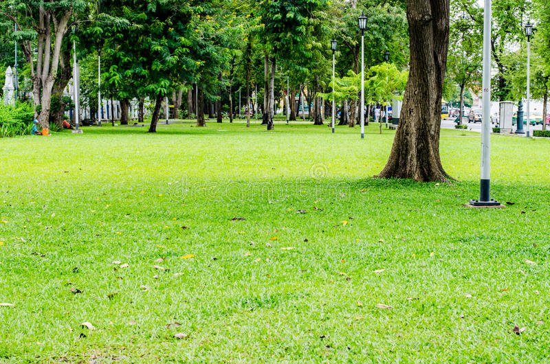 Tree and grass background in noon. Tree and grass on the garden background in noon royalty free stock photos