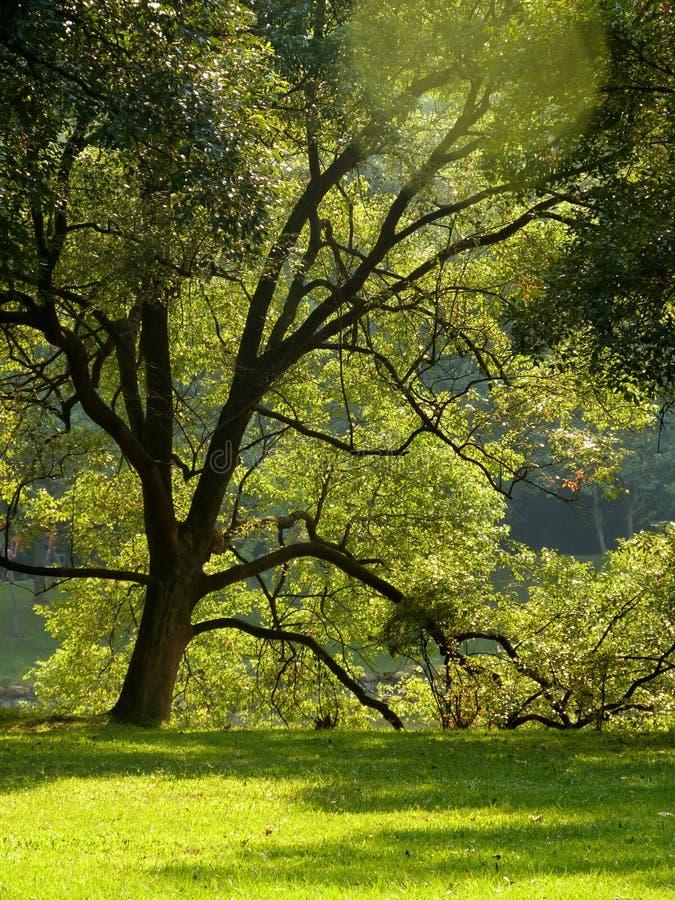 tree and grass enjoying the sunlight stock image