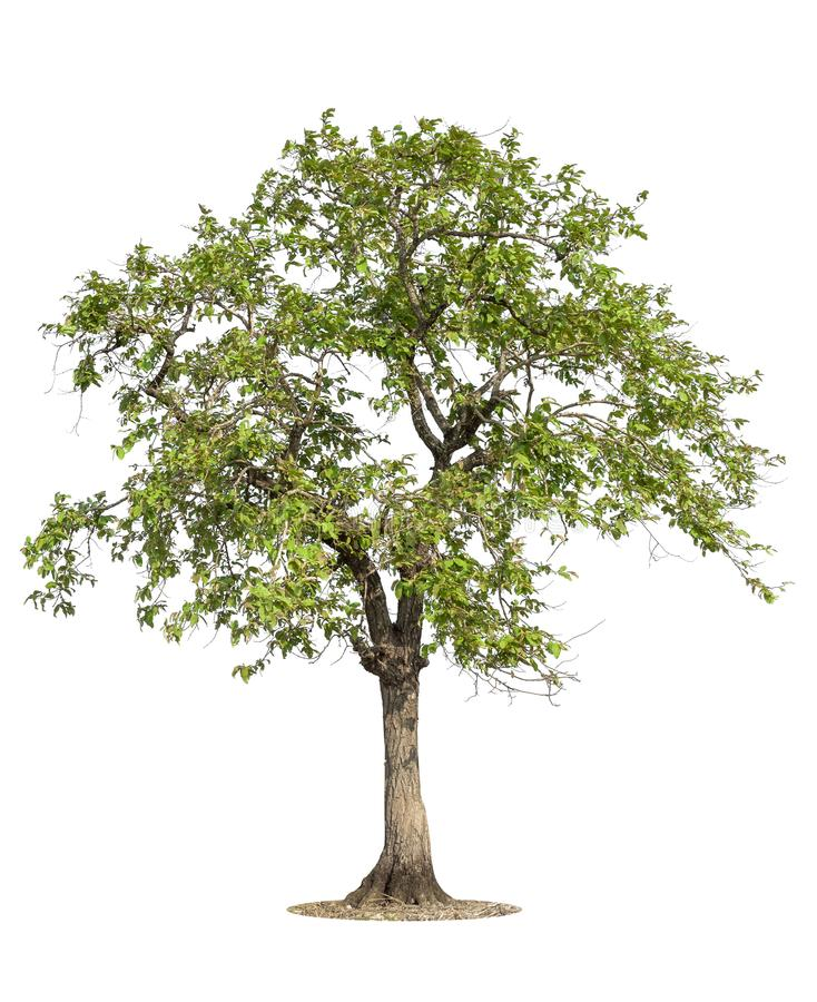 Tree with grass isolated on white background stock photography