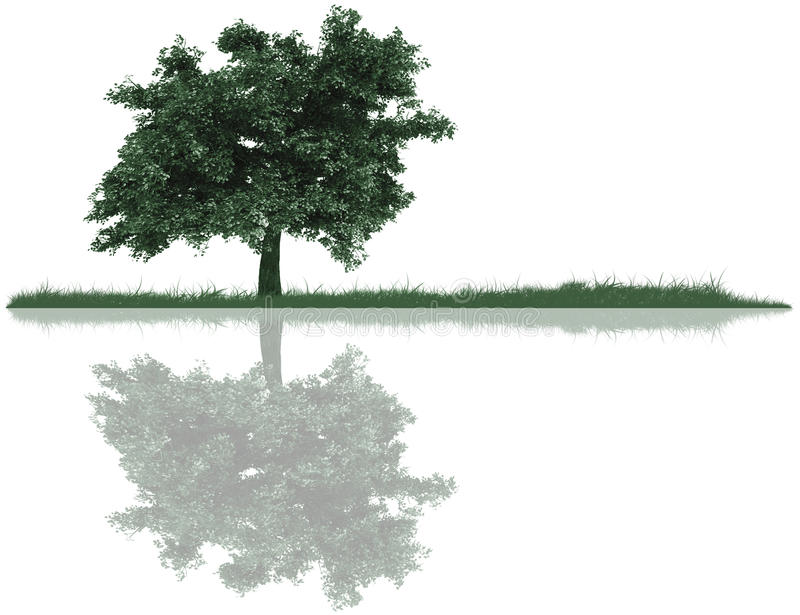 Tree, Grass And Reflection Royalty Free Stock Photo