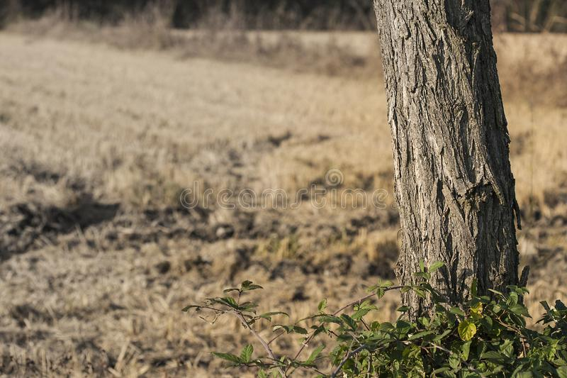 Tree, Grass, Woody Plant, Wildlife stock photography