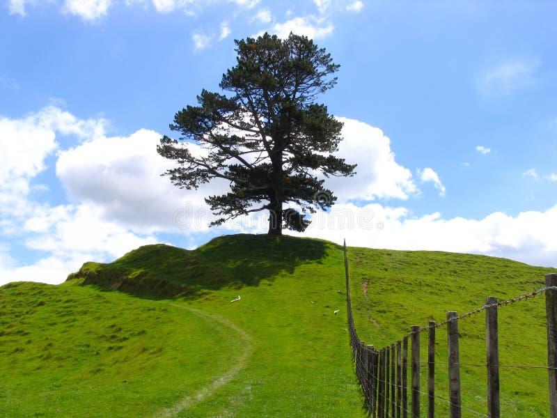 Tree And Grassland stock photo