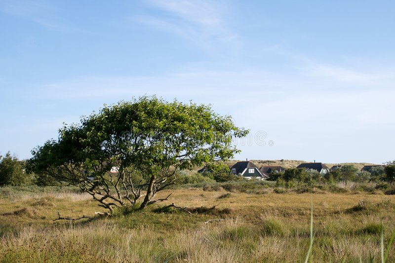 Tree on the grassland. A beautifull wide tree next to a small cottage gives a perfect impression of the quiet life on Ameland (NL stock photos