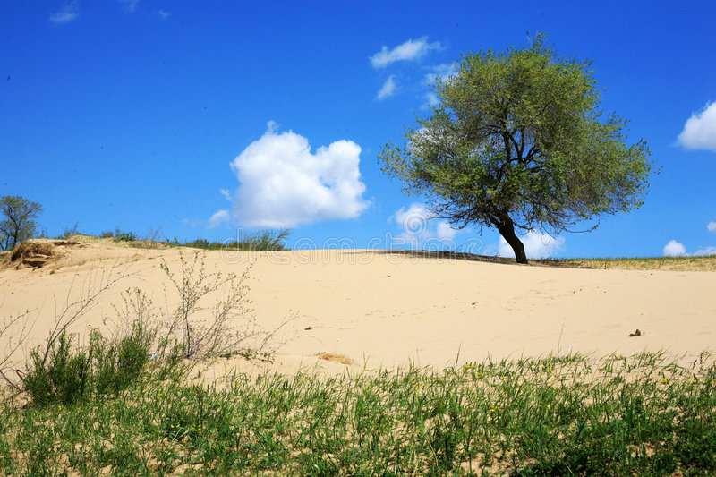 The tree in a grassland desertification. Under the blue sky with white clouds, a tree is in a grassland desertification in Mulan Paddock, china stock image
