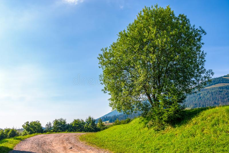 Tree on grassy hillside by the road turnaround stock images