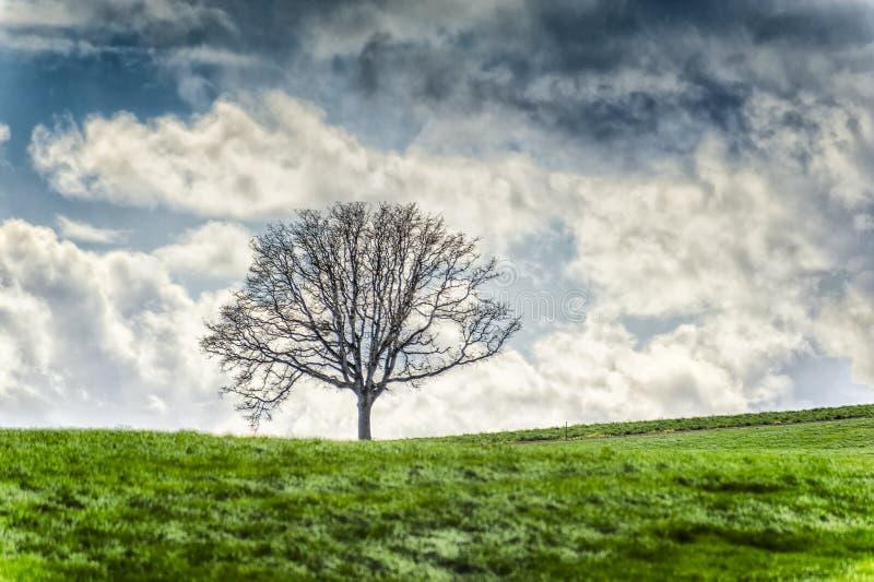 Tree on grassy hillside under cloudy skies stock photo