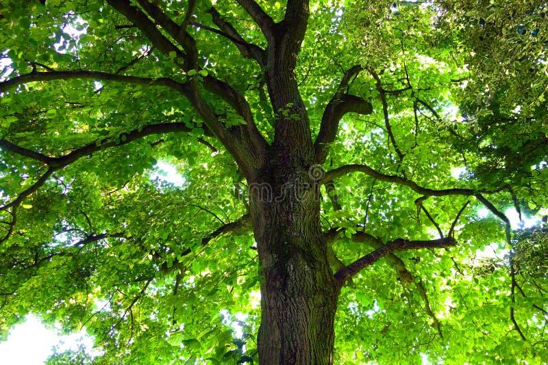 Tree, Green, Branch, Woody Plant stock photo