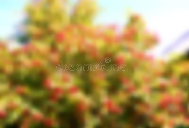 Tree with green crown and red berry on the sky background stock photos
