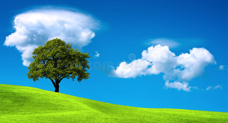 Tree on green field. And cloudy sky stock image