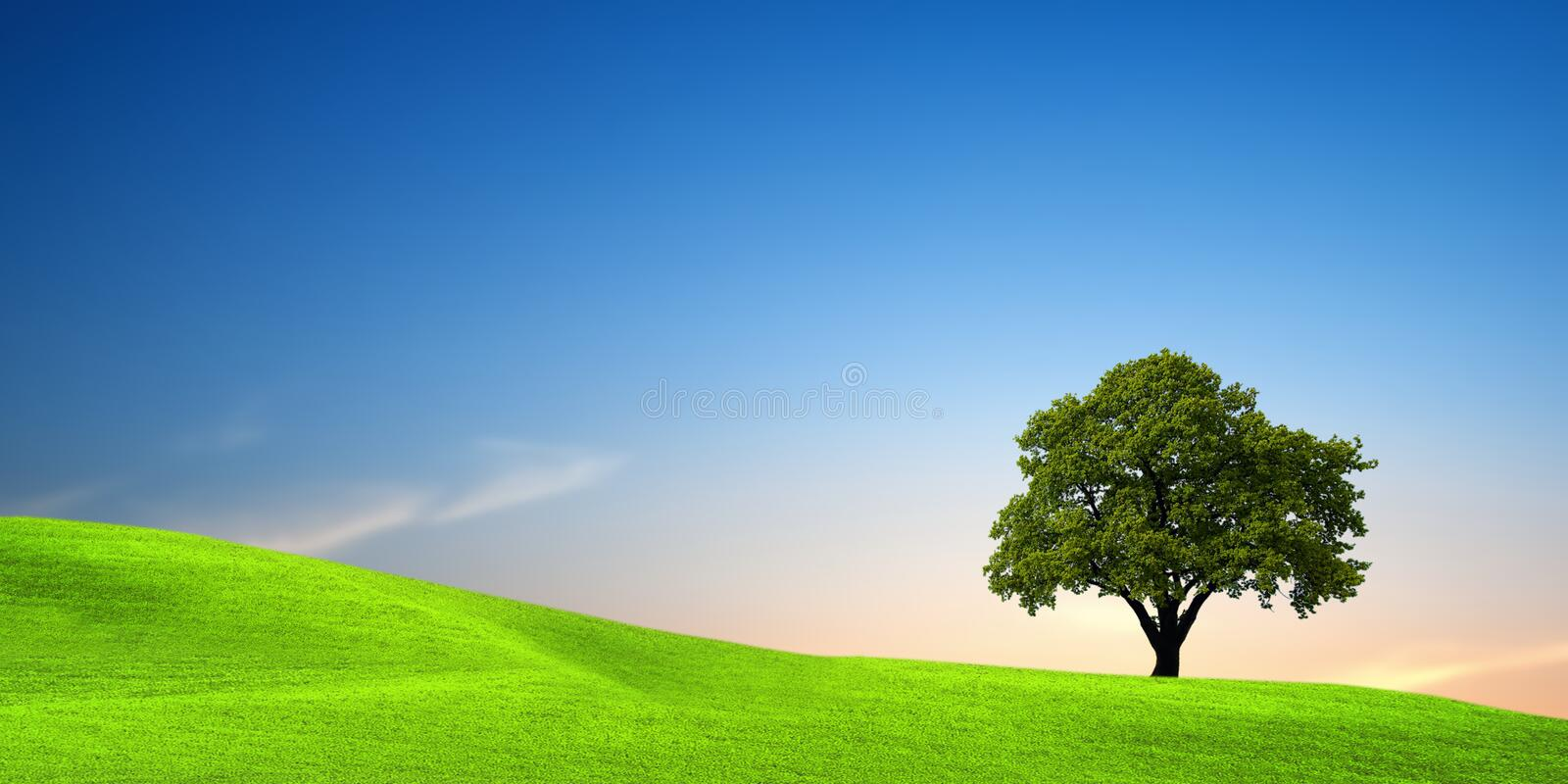 Tree on green field. At sunset royalty free stock photos