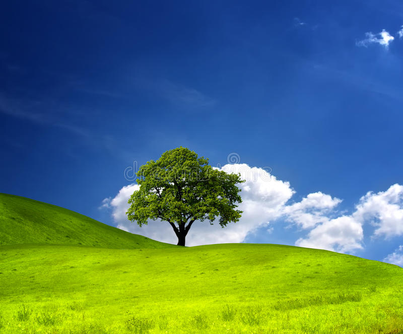 Tree on green field. And blue sky royalty free stock image