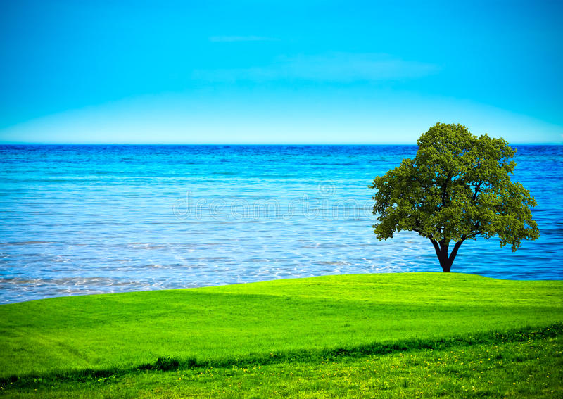 Tree on green field. And blue lake stock images