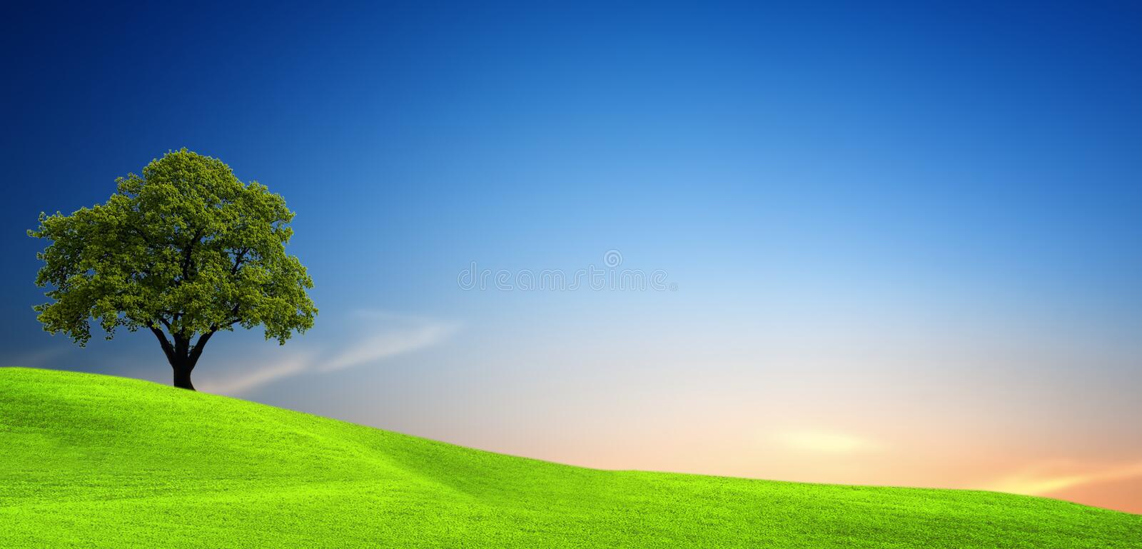 Tree in green field. At sunset royalty free stock photography