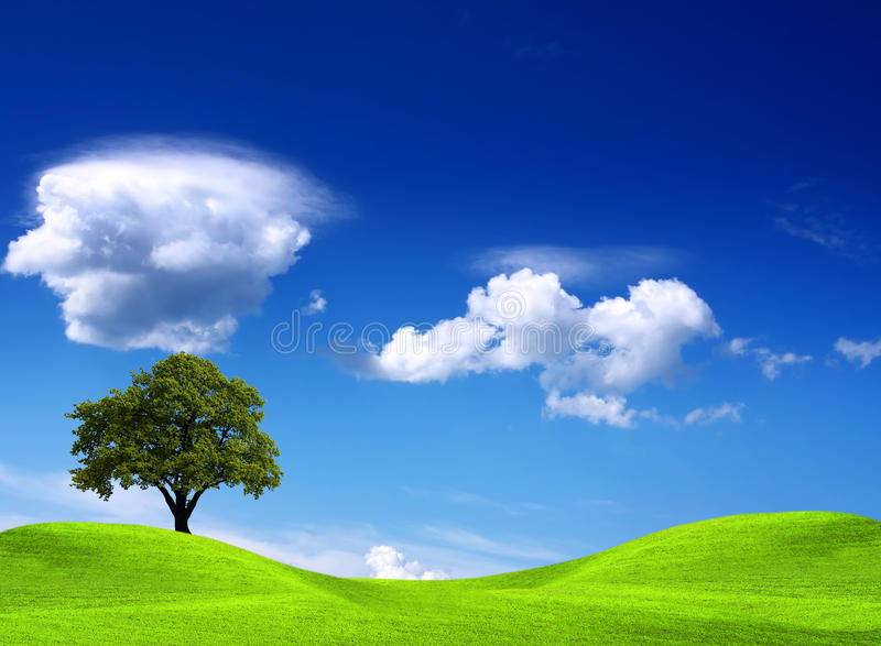 Tree on green field. And blue sky royalty free stock photos