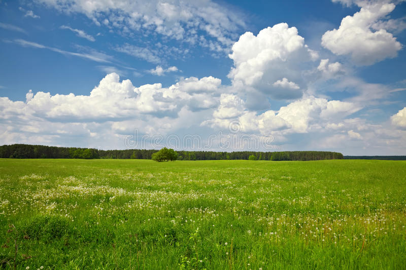 Tree in the green field. On the background of blue sky stock photography
