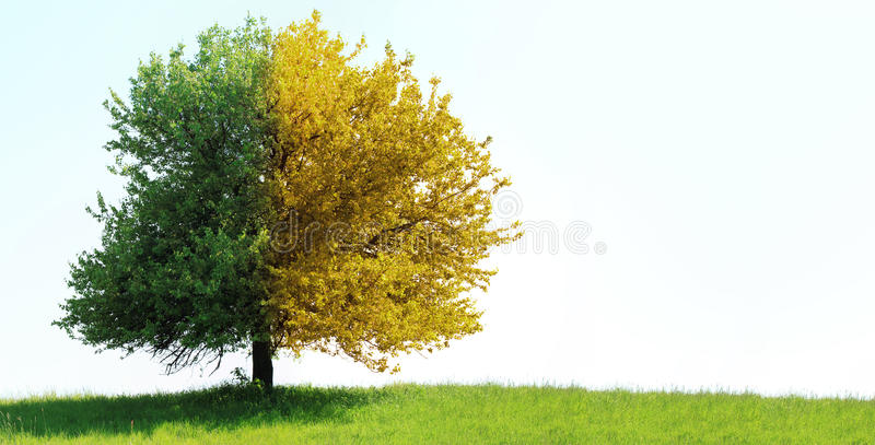 Tree on green field. (duo color tree stock photography