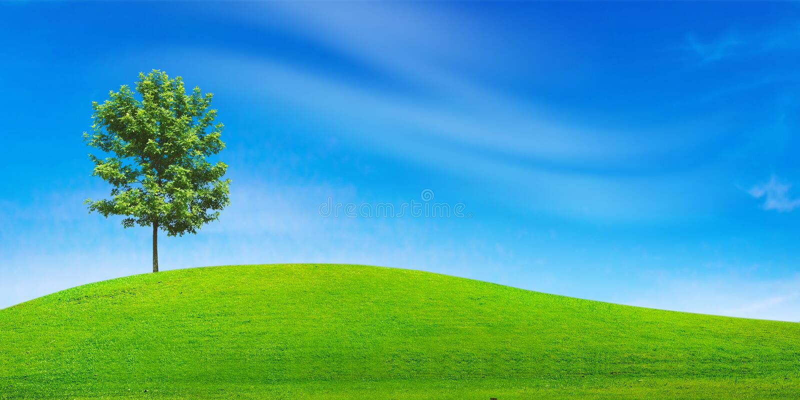 Tree in green field. And blue sky royalty free stock photography
