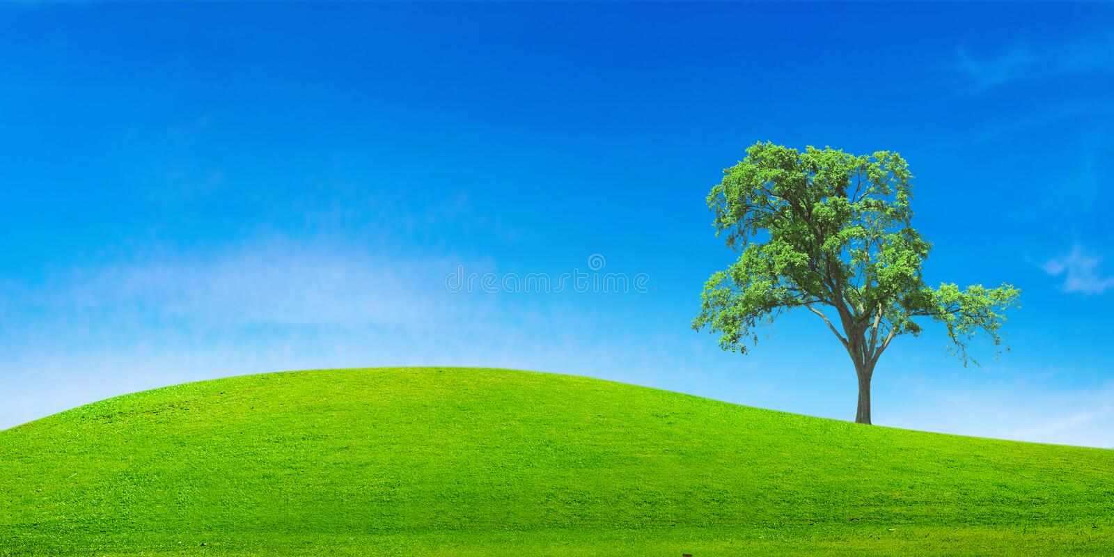 Tree in green field. And blue sky stock photography
