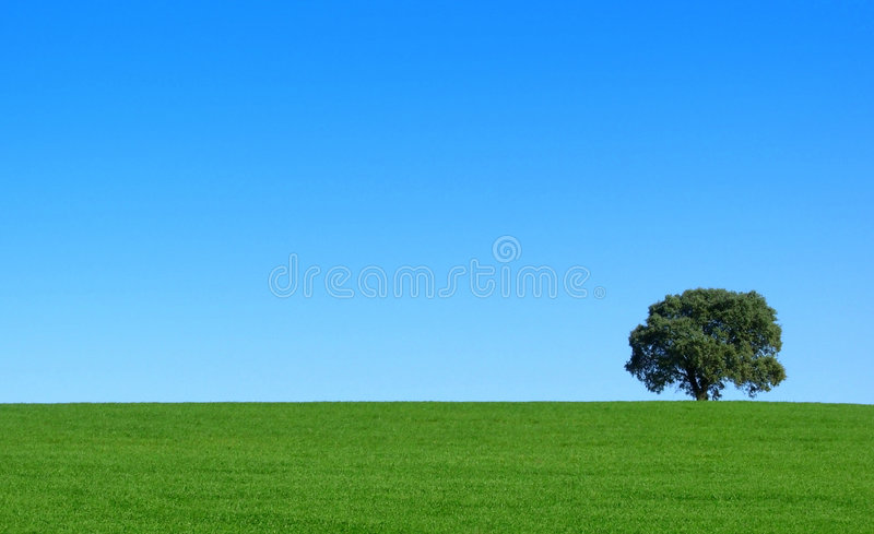 Tree in the green field. Isolated tree in the green field royalty free stock photo