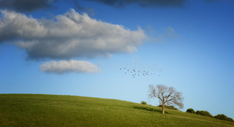 Tree on green field and birds. Tree on green field with blue sky and birds royalty free stock photos