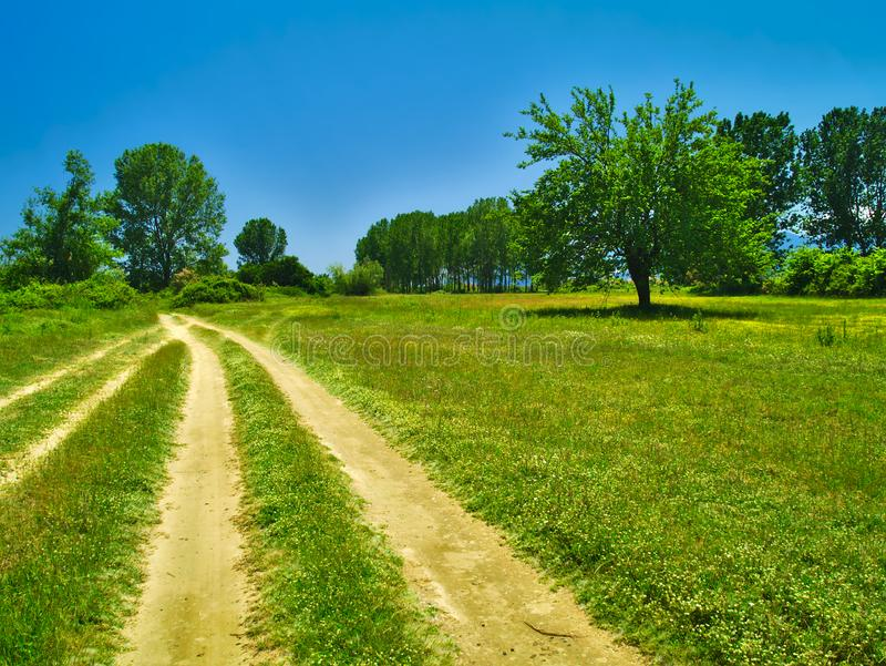 Tree in green field and dirt road. Tree in green field and dirt road with deep blue sky background royalty free stock photography