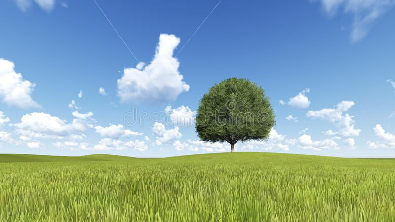 Tree green field meadow and trail 3D render. Tree green field meadow and trail aircraft 3D render stock image