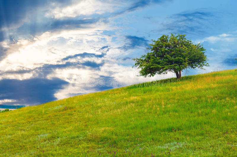 Tree green field sky hill grass landscape blue. Summer spring nature meadow cloud royalty free stock image