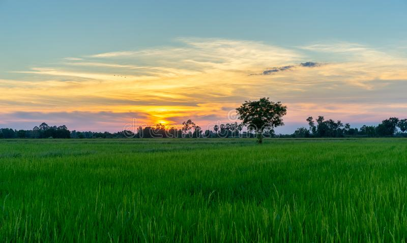 Tree in green field and sunset in countryside. Background royalty free stock images