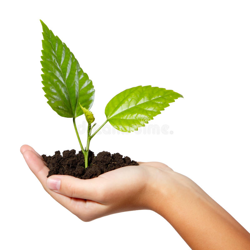 Download Tree Green Fresh In Female Hand Isolated Stock Image - Image of reforestation, ecology: 33687497