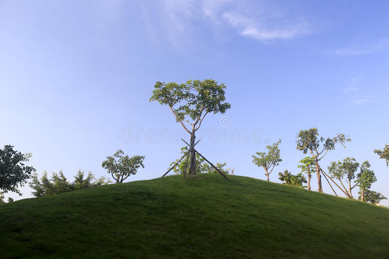Tree On Green Hill Royalty Free Stock Photography
