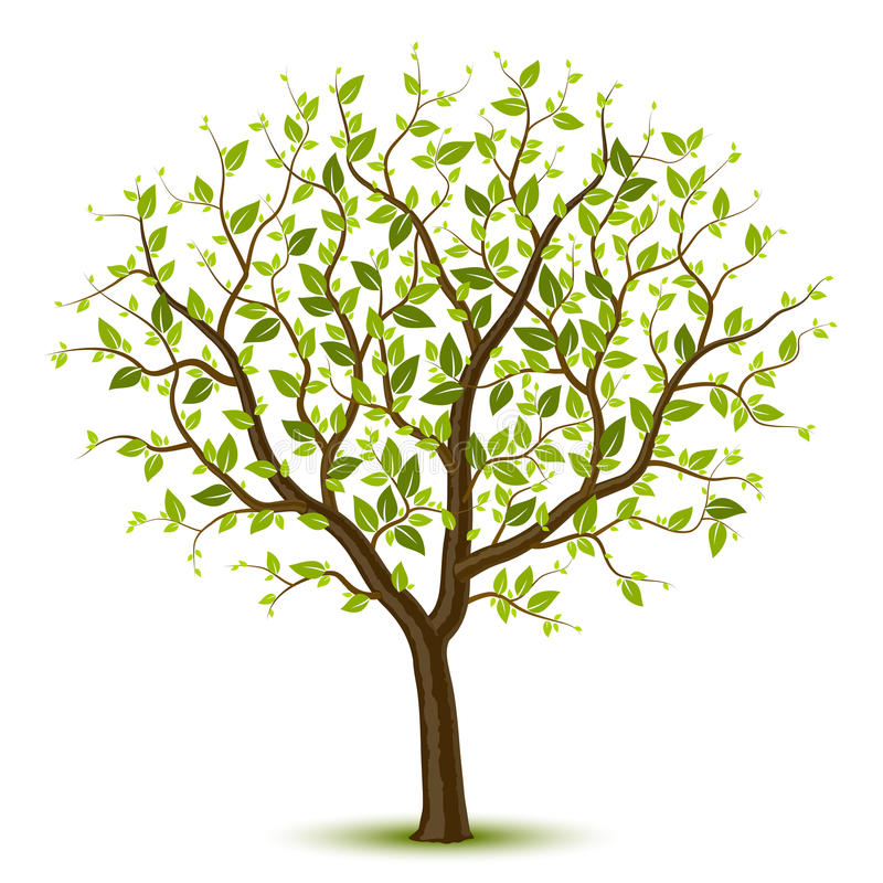 Tree with green leafage. Vector illustration of a tree with green leafage