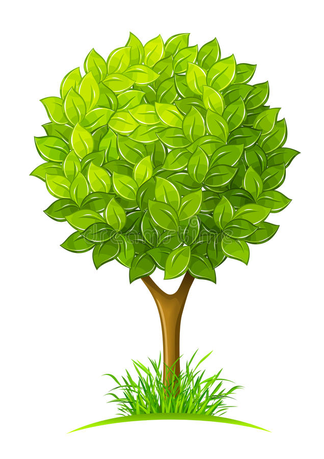 Tree with green leaves stock illustration