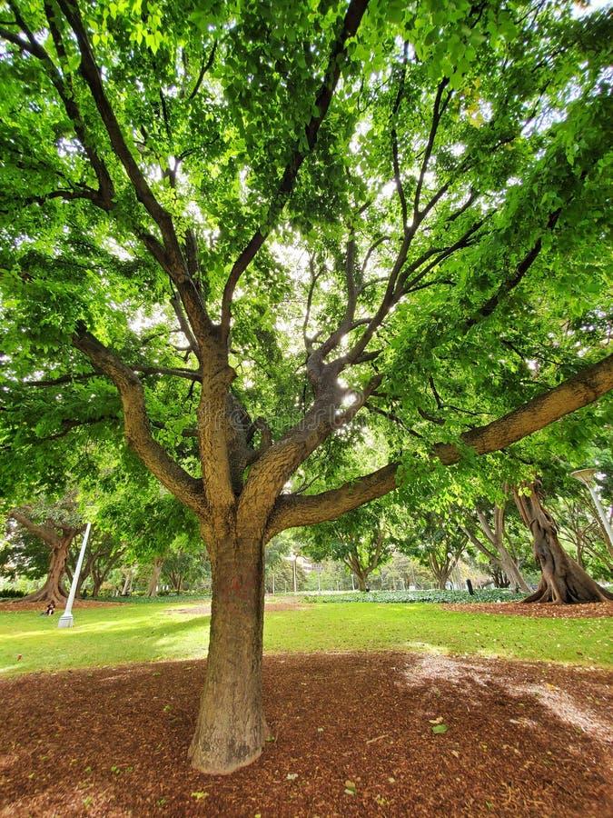 Tree green Melbourne Australia Daytime view amazing photo royalty free stock photo