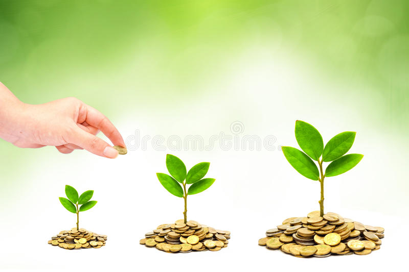 Tree growing on coins stock photo